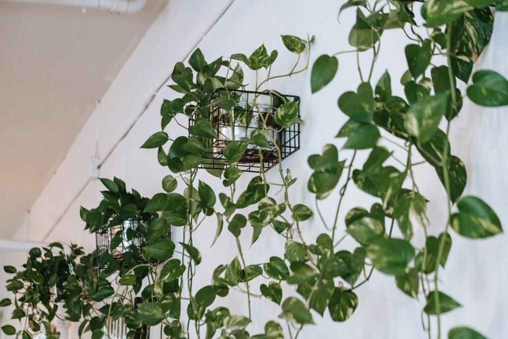 pflanzkübel raumteiler